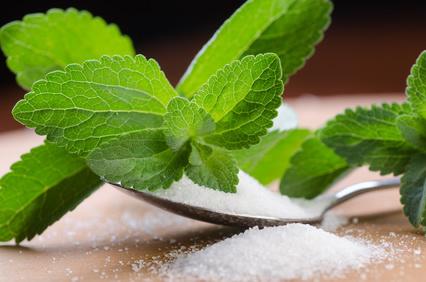 stevia-creafarma